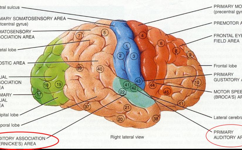 مکانیزم پیدا شدن یک لیدر از دل یک گروهِ بدون لیدر